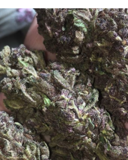 Buy Granddaddy Purple Strain